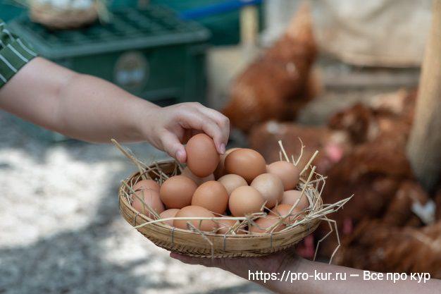 Как вырастить цыплят в домашних условиях с нуля.