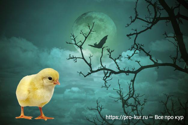 Лунный календарь на 2020год для выведения цыплят.