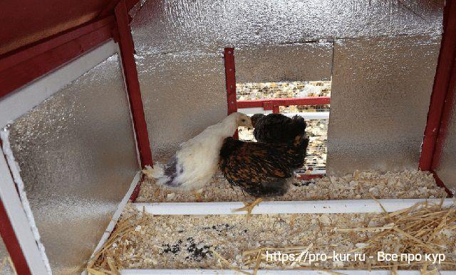 Способы утепления курятника на зиму.