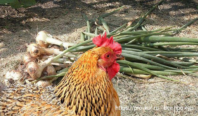 Лечение куриных блох, вшей и клещей без химии естественным путем.