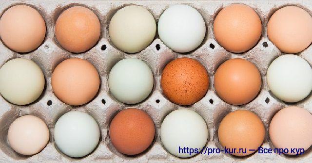 Разный цвет скорлупы куриных яиц.