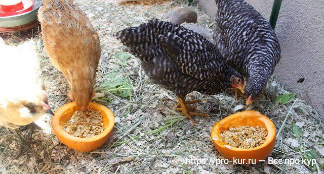Комбикорм для кур несушек, бройлеров и цыплят и какой лучше давать.