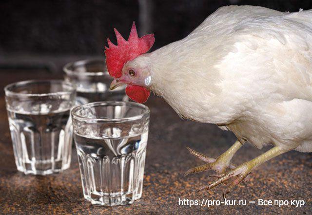 Водка курам от болезней как лекарство – дозировка и рецепты.