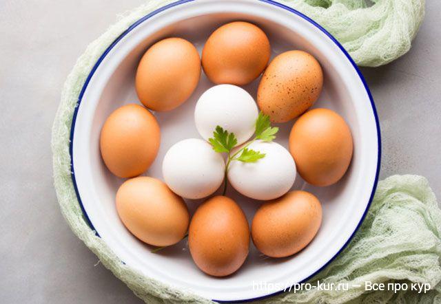 О куриных яйцах – про цвет скорлупы и желтка, свежесть и хранение.