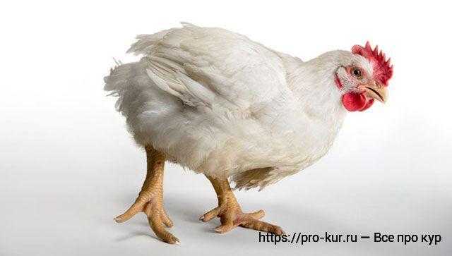 Витамины для цыплят бройлеров в домашних условиях.