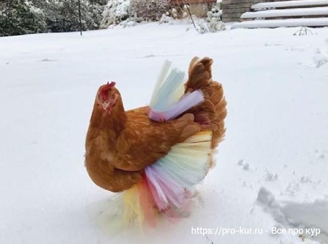 Секреты выгодного выращивания кур.