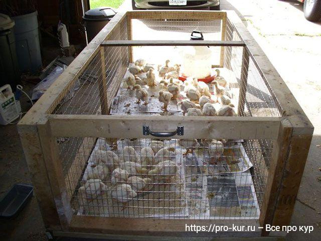 Из чего сделать брудер для цыплят быстро и бесплатно.