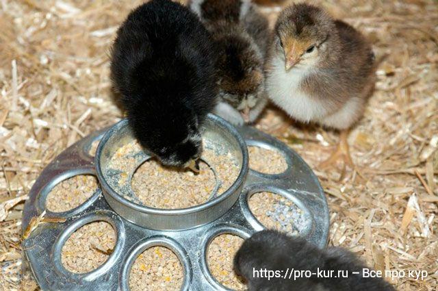 Кормушки для цыплят – обзор 4 видов, плюсы и минусы.