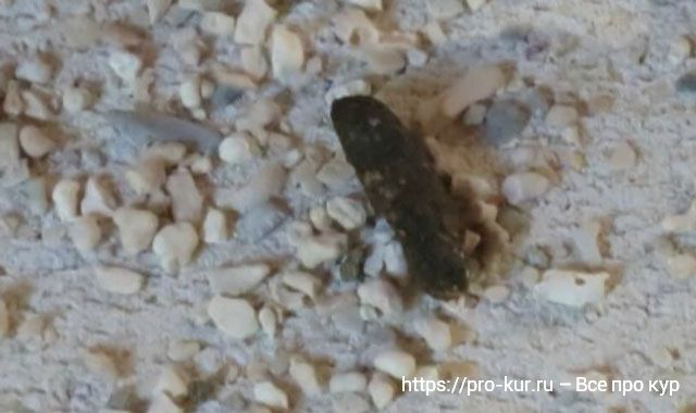Помет от крыс и мышей обнаружен в курятнике.