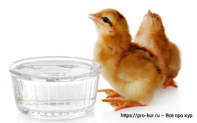 Яблочный уксус курам и цыплятам сколько давать и как часто?