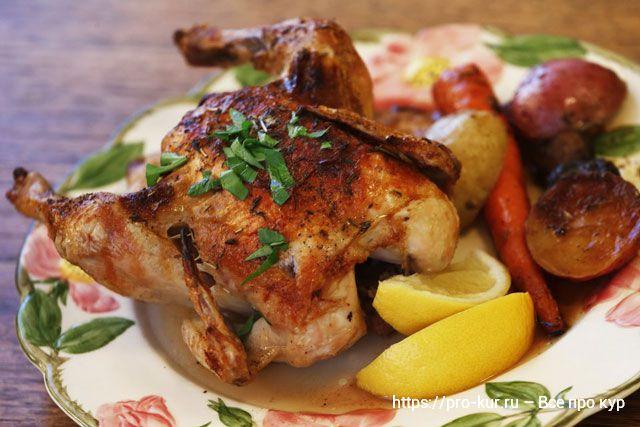 Цыпленок корнишон и бройлер чем отличаются? Какой лучше?