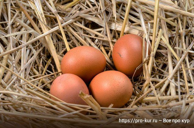 Как мыть куриные яйца правильно и надо ли это делать?