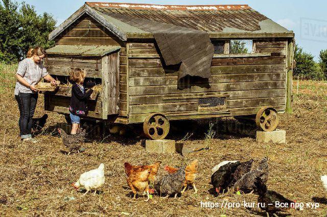 Что учесть при строительстве курятника для мини фермы?