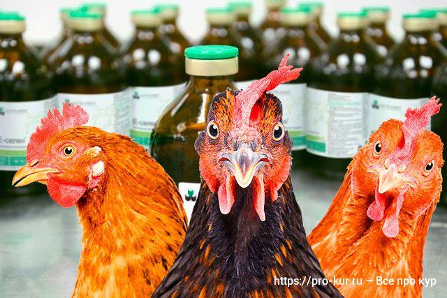 Е-селен для кур и птиц – как пропоить, дозировка, отзывы, инструкция.