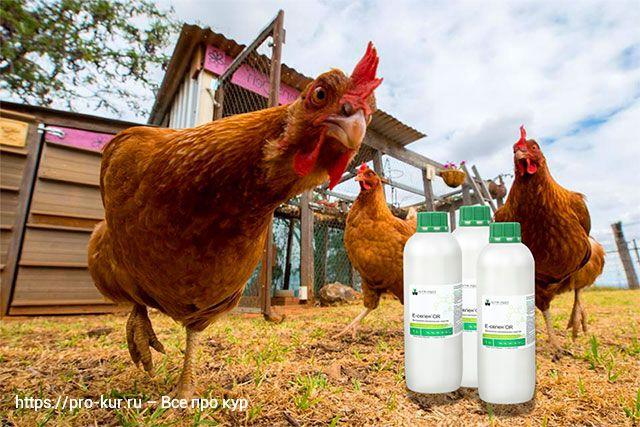Е-селен для кур и птиц – инструкция по применению, дозировка, как давать и отзывы.