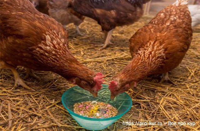 Как определить, какие курицы несутся, а какие – нет?