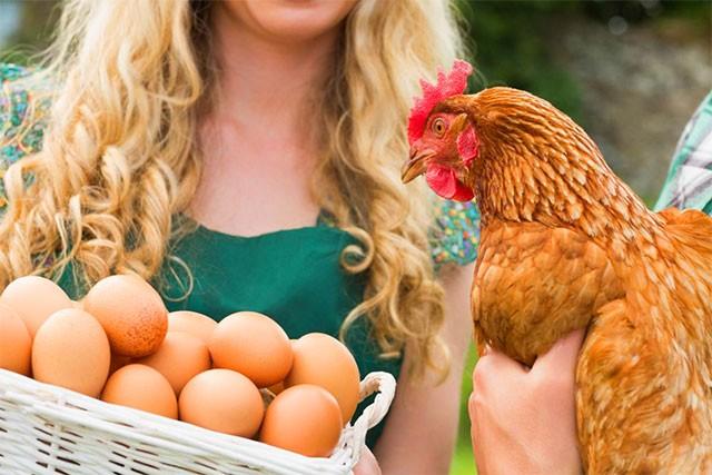 Руководство по кормлению цыплят и кур для сбалансированной диеты в любом возрасте.