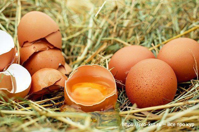 Яйценоскость кур-несушек от чего зависит?