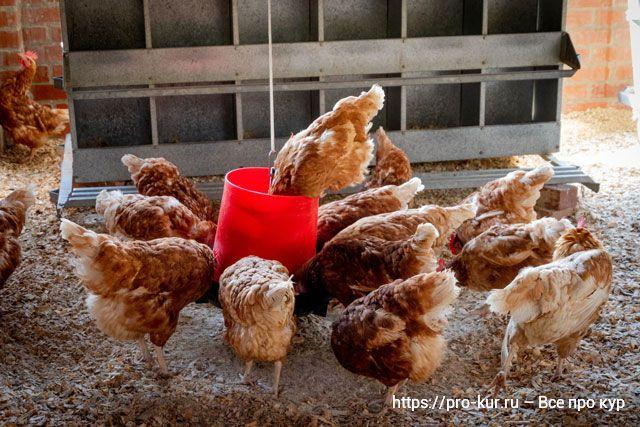 Кормовой трикальцийфосфат для взрослых кур, цыплят и бройлеров.