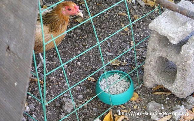Ракушка для кур несушек, цыплят и бройлеров, польза и как давать.