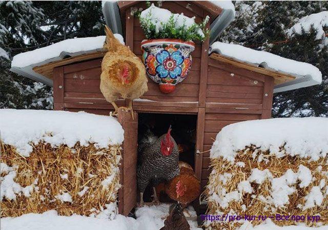 Зимнее содержание кур несушек.