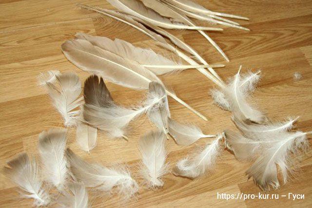 Гусиный пух и перья как ощипать живого гуся.