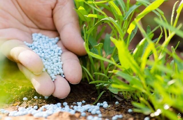 Азот и азотные удобрения в жизни растений и способы удобрения.