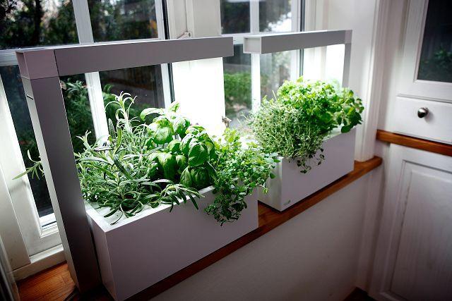 Как вырастить 5 полезных растений на подоконнике.