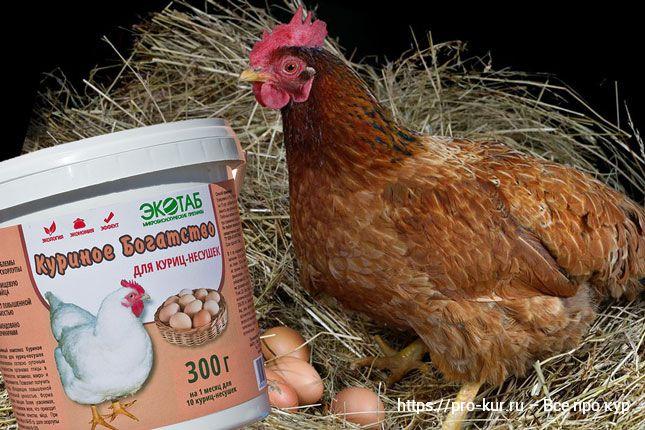 Витаминное питание кур несушек зимой и популярные премиксы.