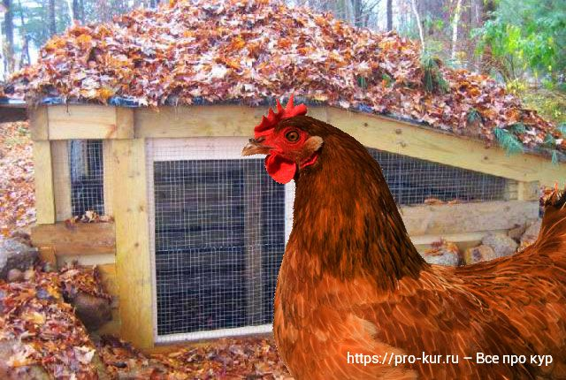 Строительство курятника в яме.