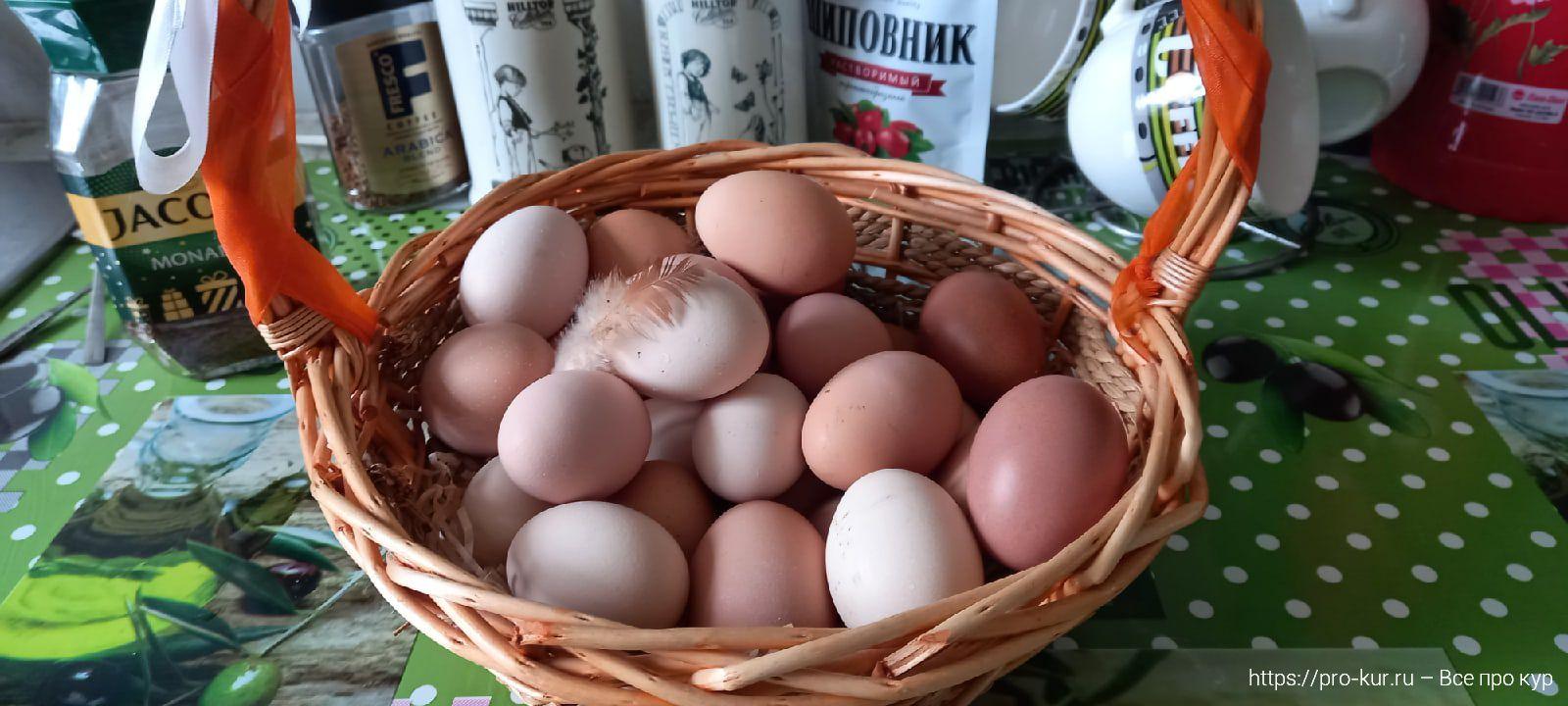 Яйца для инкубации.