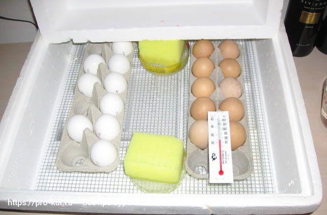 Инкубация в домашних условиях для начинающих с нуля.