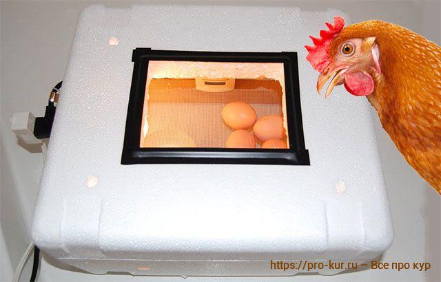 Как сделать инкубатор из пенопласта своими руками в домашних условиях.