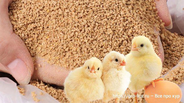 Кормление цыплят бройлеров до месяца.