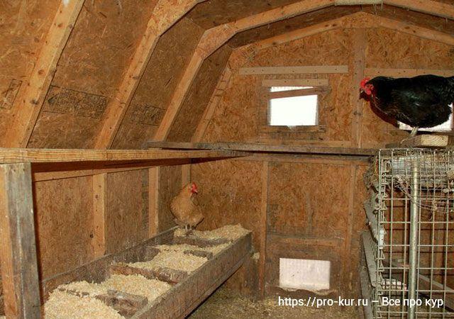Курятник в сарае своими руками – обустройство на 10 - 20 кур несушек.