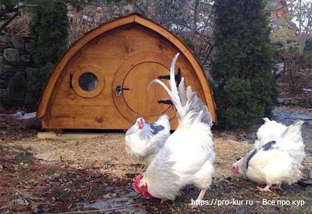 Птичник на дачном участке как строить и спланировать правильно.