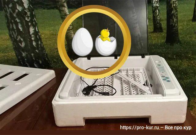 Инкубатор HHD на 36 яиц инструкция по эксплуатации.