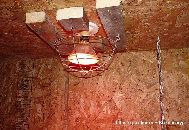 Крепление тепловой лампы в курятнике на потолке.