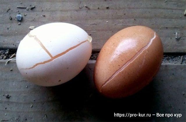 Замороженные яйца зимой как разморозить и можно ли есть?