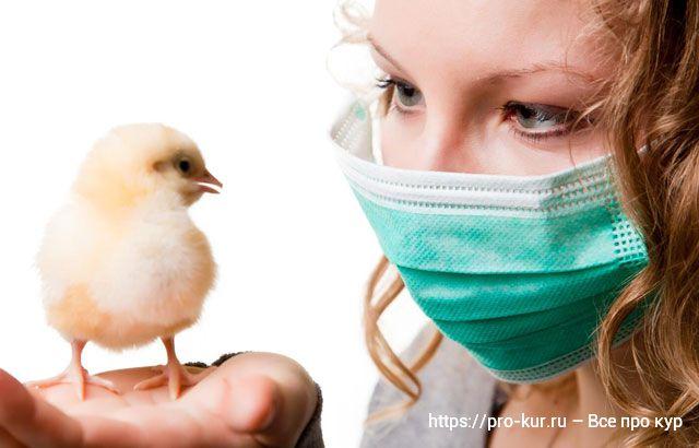Инфекционный энцефаломиелит кур несушек и цыплят.