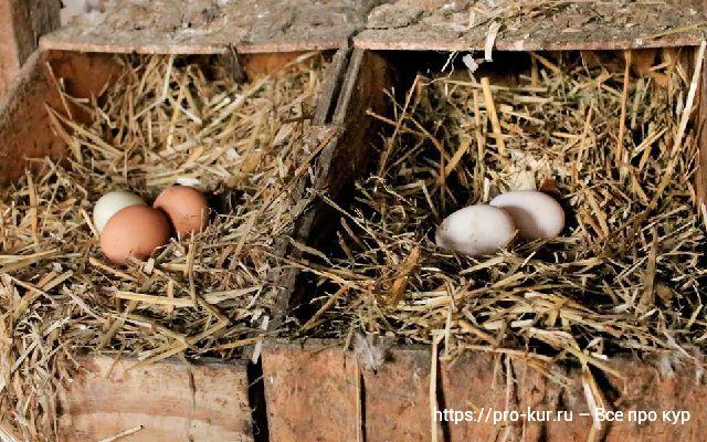Как получить больше яиц от несушек?