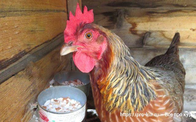 Скорлупа яиц в рационе цыплят, кур и бройлеров – как давать.