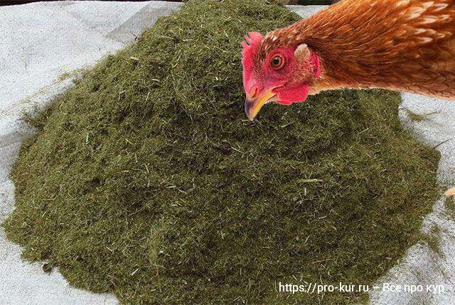 Травяная мука для кур несушек для яйценоскости.