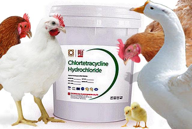 Хлортетрациклин для кур несушек и другой домашней птицы.