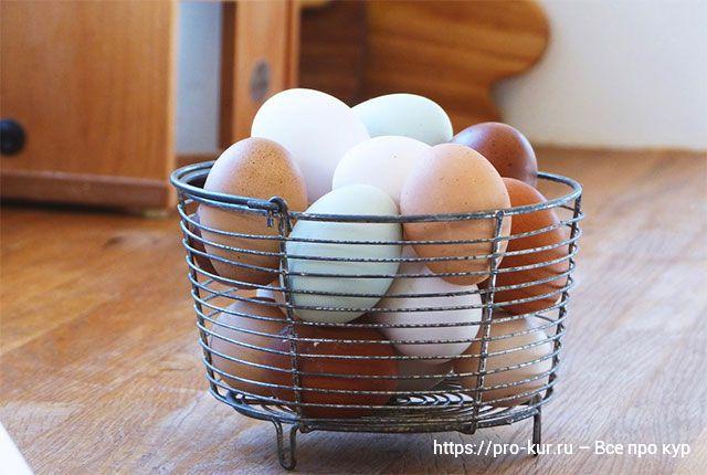 Все про хранение куриных яиц и срок годности.