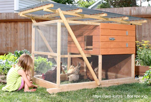 Как держать кур на даче или садовом участке.