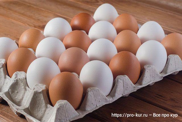 Коричневые и белые яйца у кур в чем разница.