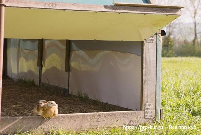 Напольное содержание кур несушек плотность посадки.