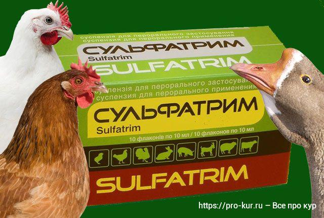 Сульфатрим – как давать препарат для домашней птицы.