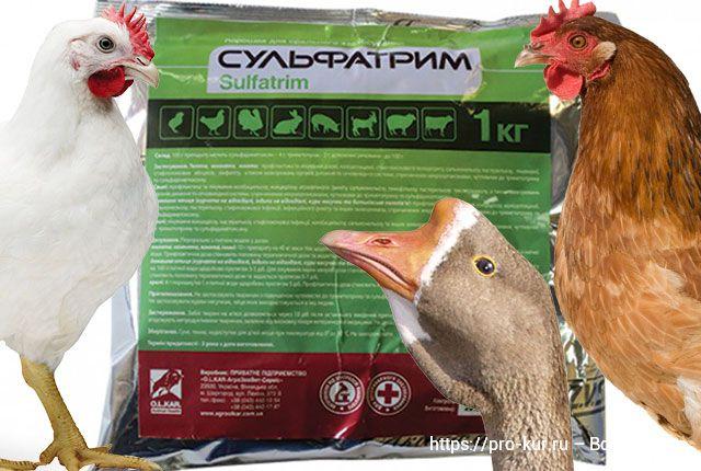 Сульфатрим инструкция по применению для домашней птицы.